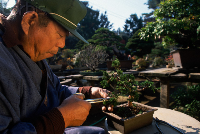 enyoing the bonsai tree care activities