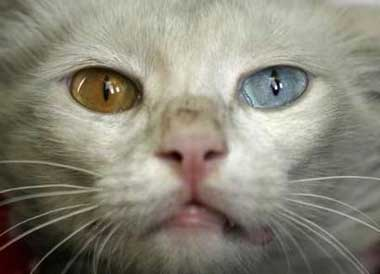 [071130-kucingbermataaneh.jpg]
