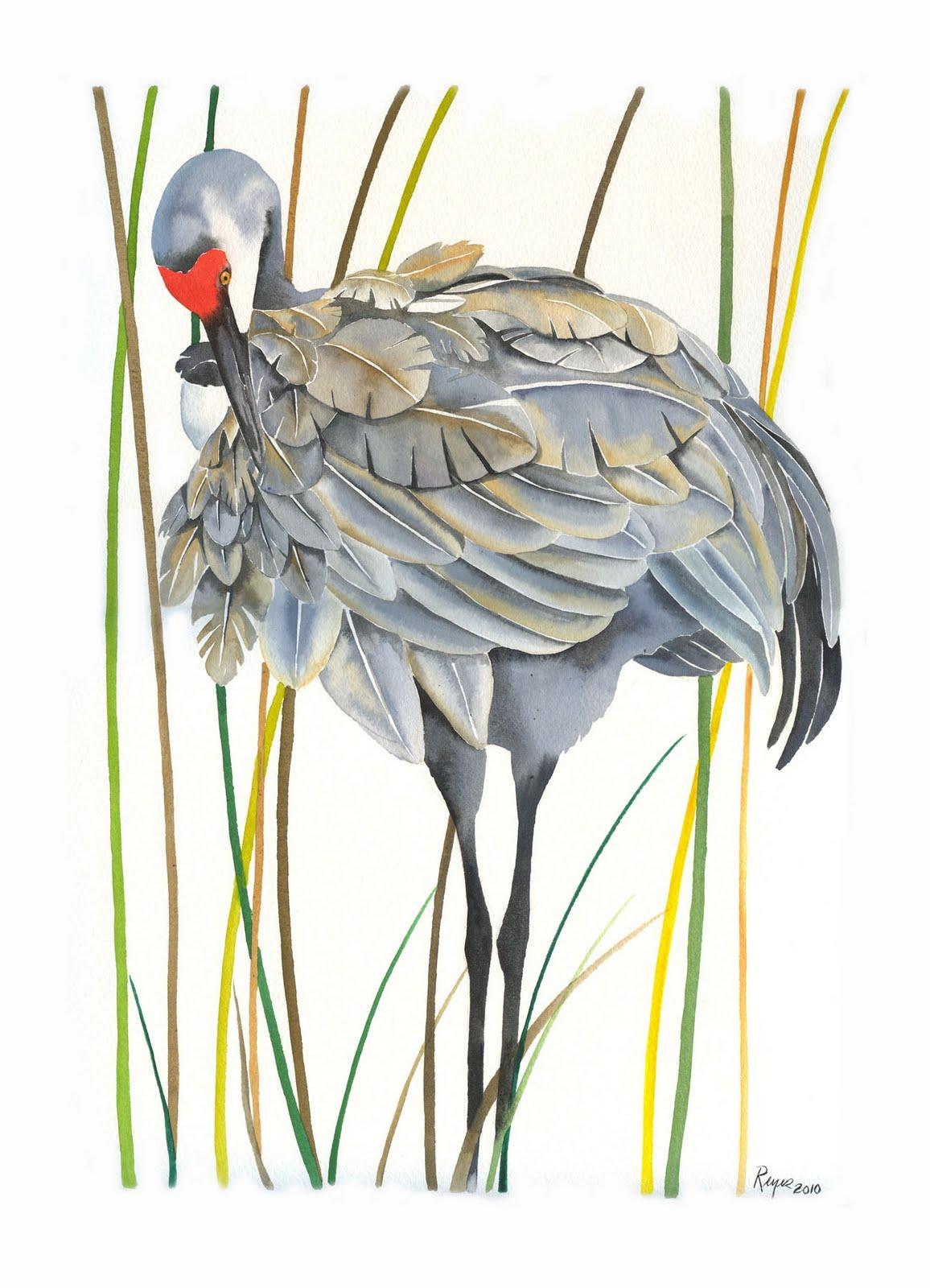 Sandhill Crane Bird Drawing  Sandhill Crane ...