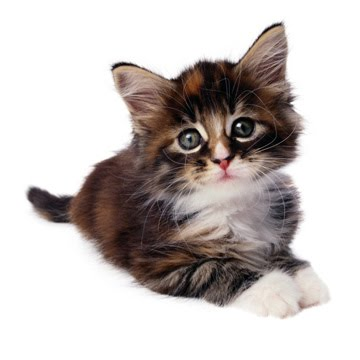 wallpaper kucing lucu. Wallpaper Lucu|Gambar