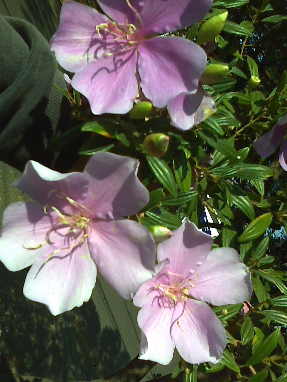 rua manaca jardim das flores : rua manaca jardim das flores ? Doitri.com