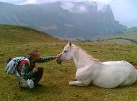 Il cavallo dei Silenzi d'Alpe - Das Pferd der Stille auf der Seiser Alm