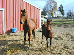 Adagio & Mojo.... my friend's show ponies