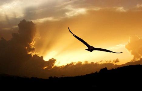 A liberdade é como um pássaro que voa para todo lugar, sem limites