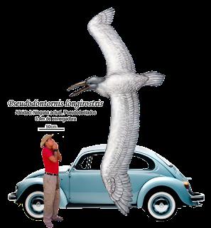 Fig 29 pseudodontornis longirostris a escala basado en