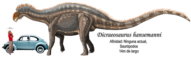 Dicraeosaurus hansemanni a escala.
