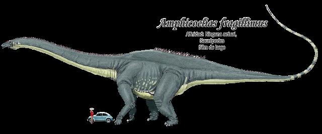Amphicoelias fragillimus a escala.