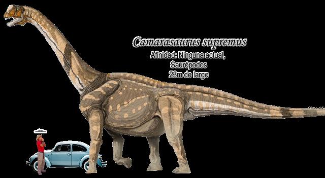 Camarasaurus supremus a escala