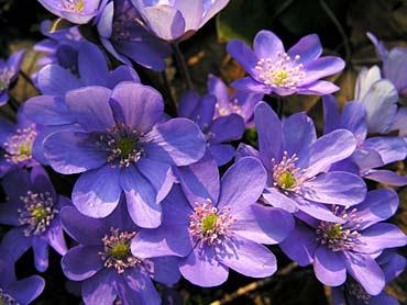 Violetas.jpg (370×278)