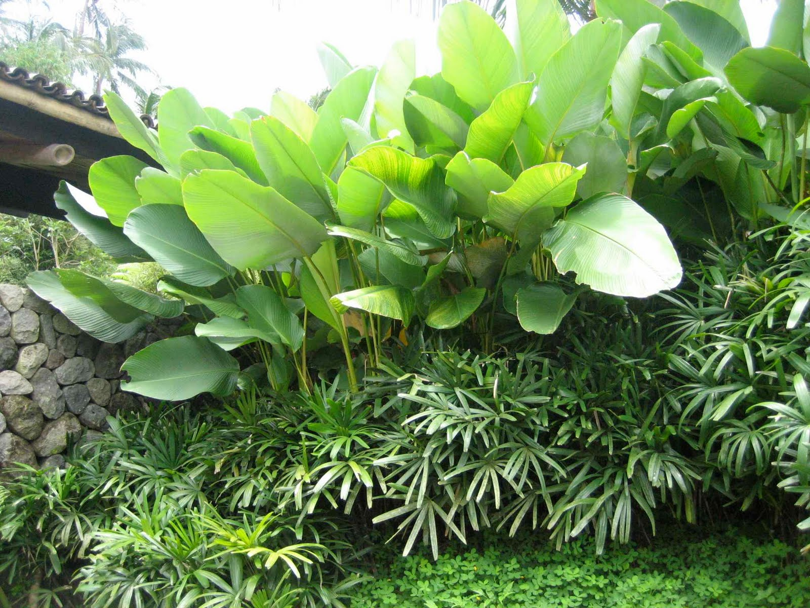 Garden Ideas Tropical tropical garden ideas brisbane after n inside
