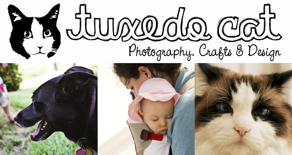 Tuxedo Cat Photography