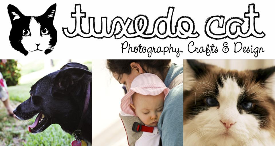 Tuxedo Cat Photography
