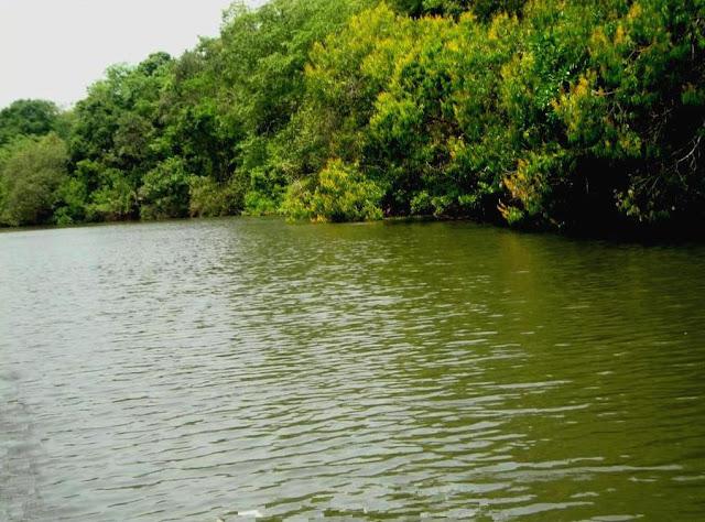 Trecho do Rio das Almas em Goiás- Mata Ciliar