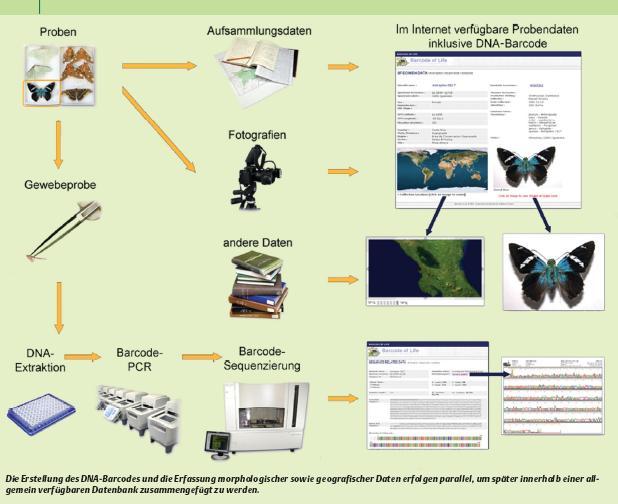Protocolo para el procesamiento de las muestras