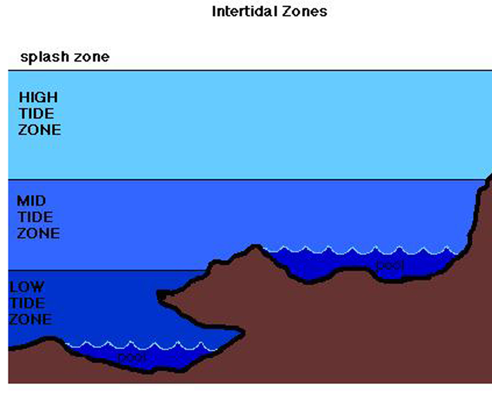 duxbury free tides software