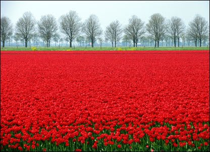 [Tulip+Fields+(1).jpg]