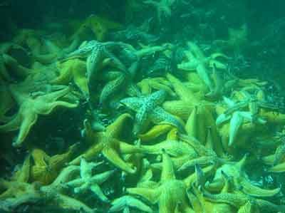 aneh gak aneh macam macam jenis bintang laut yang warna
