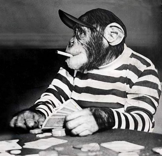 Monkey Addicted to Cigarette Seen On www.coolpicturegallery.us
