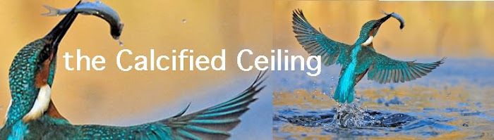 The Calcified Ceiling