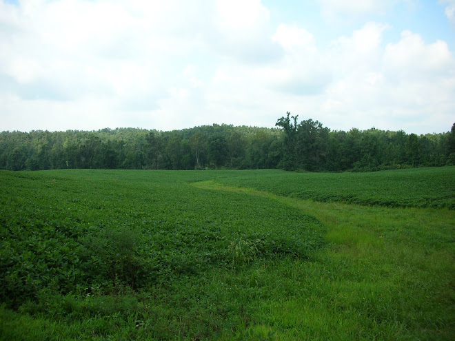 Willis Hickman Southard's farm in 2009