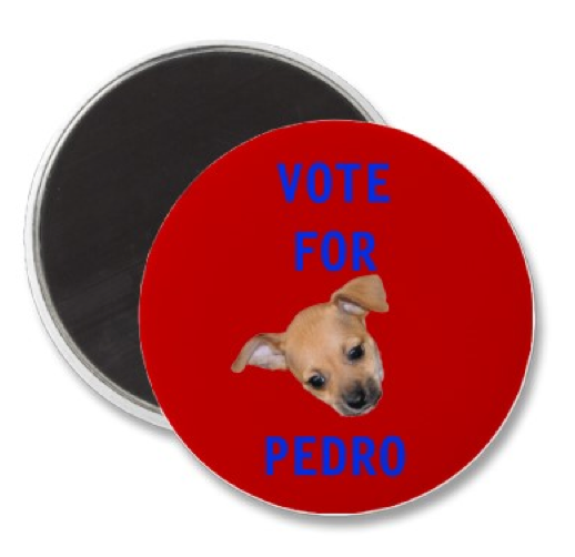 twinkie tiny dog teacup chihuahua a dog blog nov 1 2010. Black Bedroom Furniture Sets. Home Design Ideas