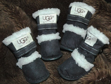 uggs dogs china