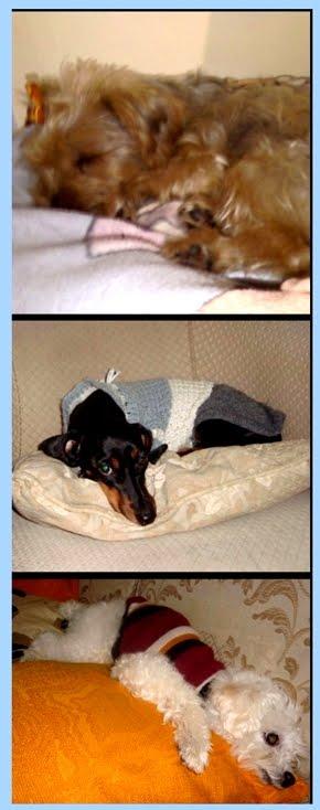 Um amorzinho quando dormem...