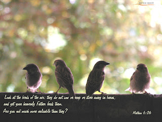 Look at the birds of the air they do not sow or reap or store away in barns, and yet your heavenly Father feeds them. are you not much more valuable than they? Matthew 6:26 bible verse desktop background photo