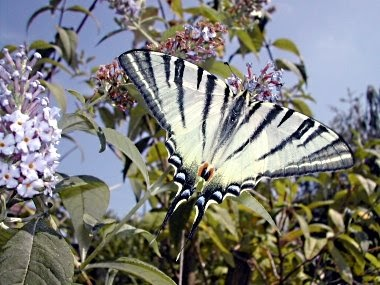 Il giardino naturale cinque piante pi una per for Foto farfalle colorate