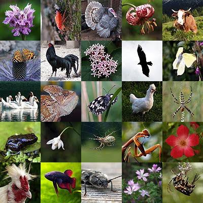 Biodiversità, una ricchezza per tutti. Foto di Andrea Mangoni.