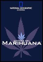 Inside marijuana, dentro de marihuana