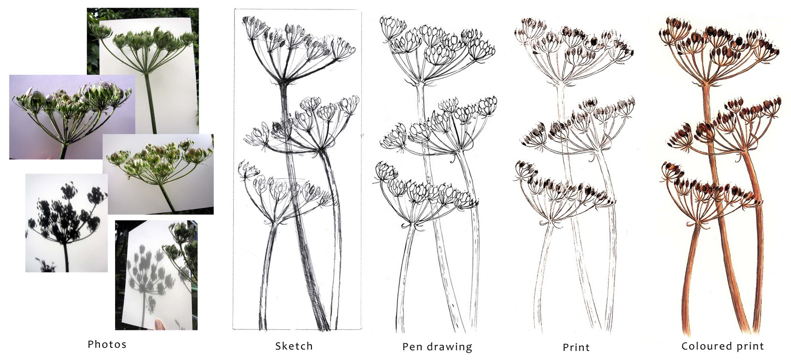Alison Hullyer Seed Heads