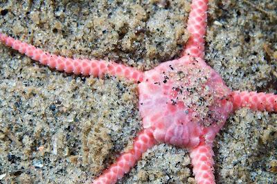 hidupan laut