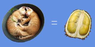 http://2.bp.blogspot.com/_l7ttS8zhQqo/TFvzMgj-yKI/AAAAAAAAAwY/mVwTkDE7KrQ/s1600/durian-kucing-tidur.jpg
