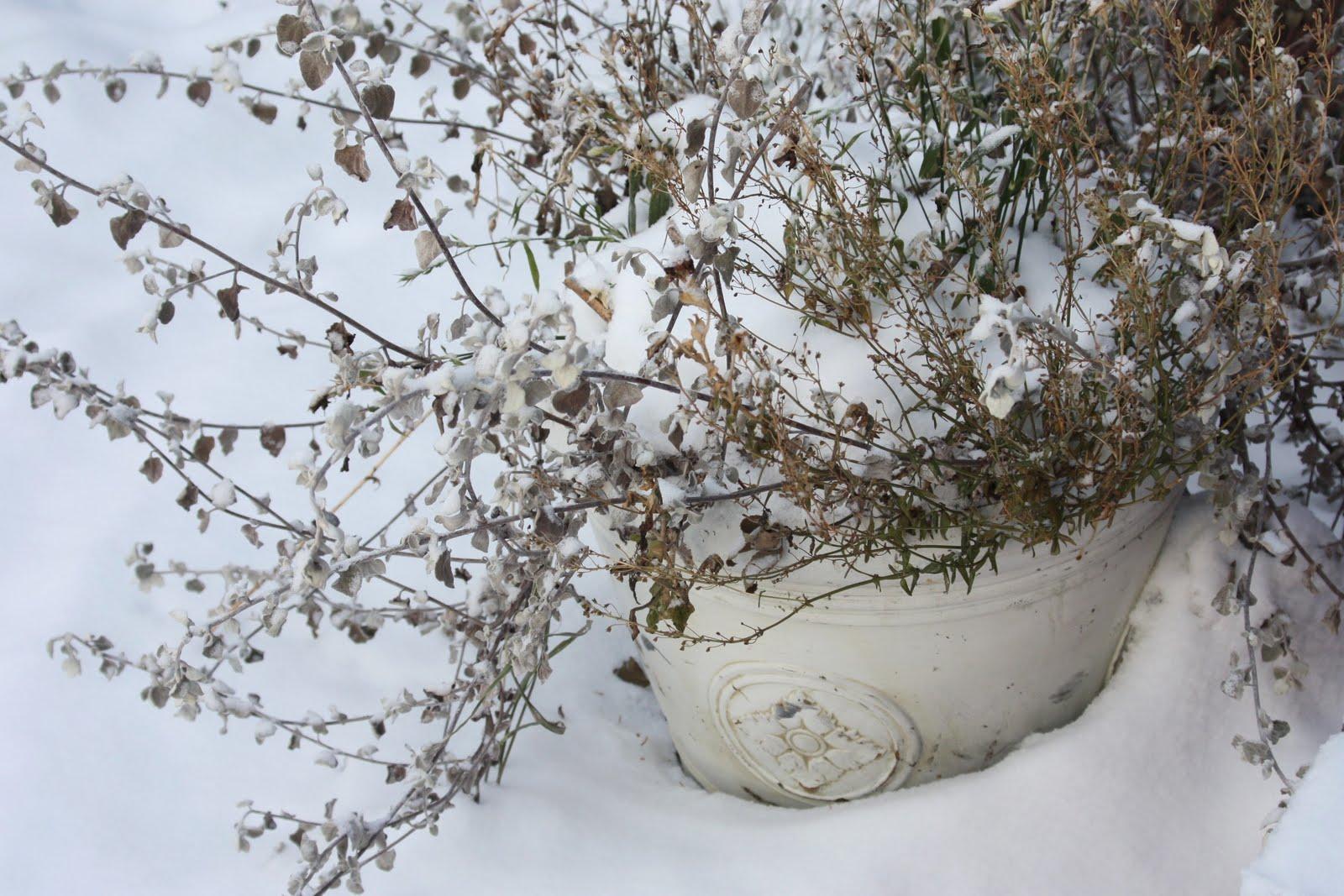 last frontier garden planning for winter beauty