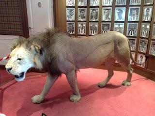 El león se encuentra situado en el antepalco de San Mamés