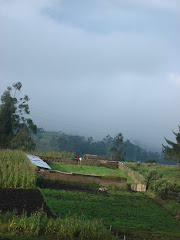granja avicola Alli Kawsay