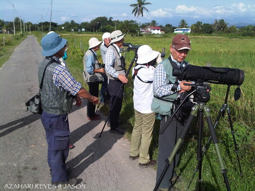 Bird Watching Tuaran Paddy Fields