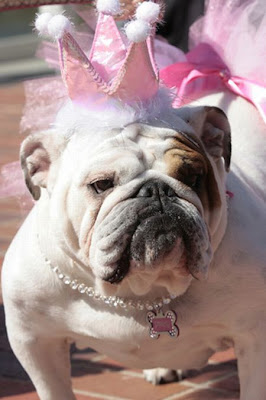 Bulldog Beauty Contest 2010