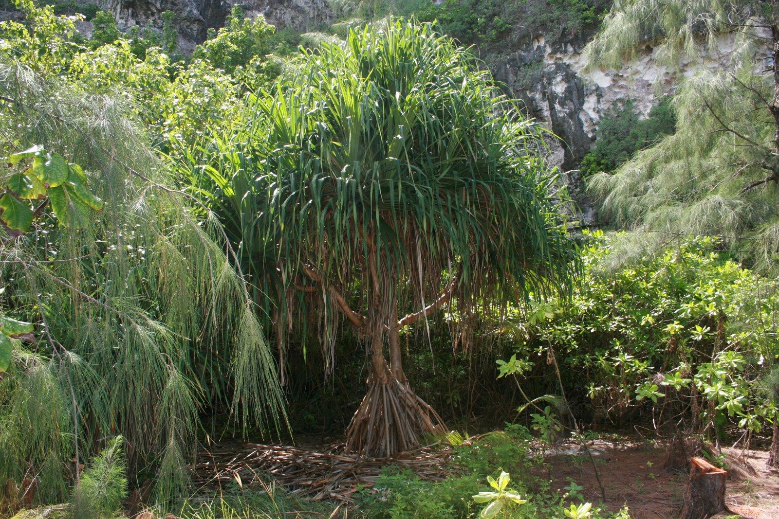 [mangrove]
