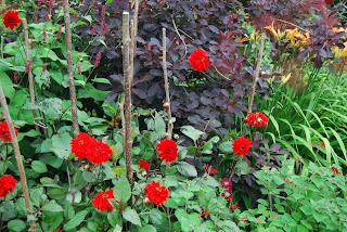 Stephen Winfield Forest Flower