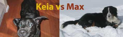 Keia vs. Max
