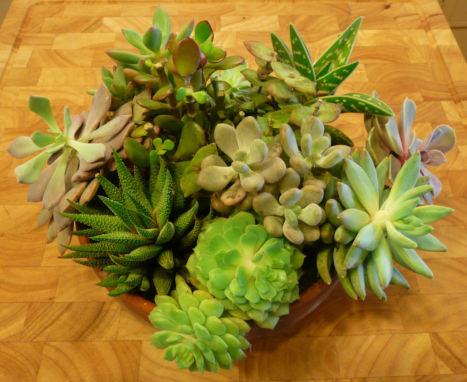 I 39 m here might as well win taking care of succulents for How do you take care of succulents