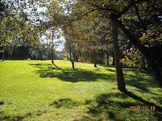 D. F. Buchmiller Park