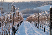 Le vigne innevate di Villa Petriolo