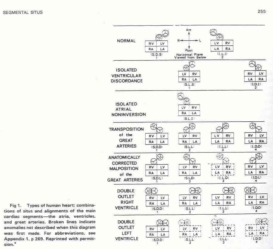 Pedi Cardiology Anatomy Terminology Van Praaghs Segmental Formula