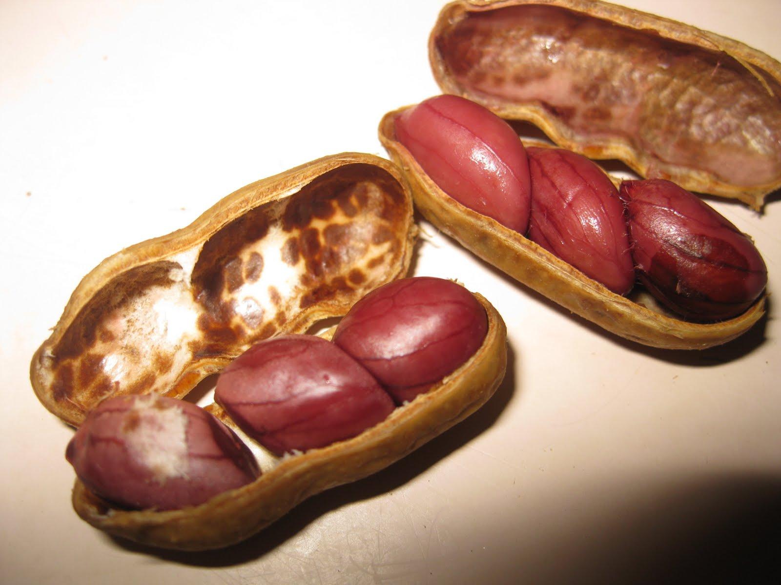 Nana's Recipe Box: Boiled Peanuts
