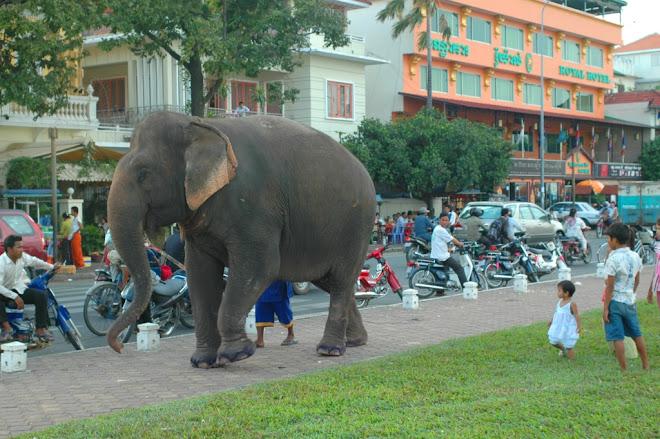 Olifant in Phnom Penh