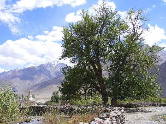 der größte Baum in der Umgebung