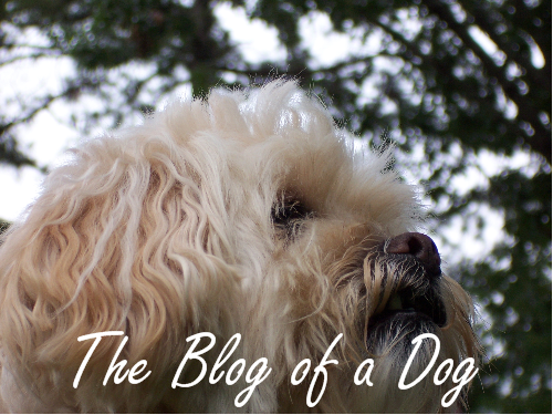 The Blog of a Dog